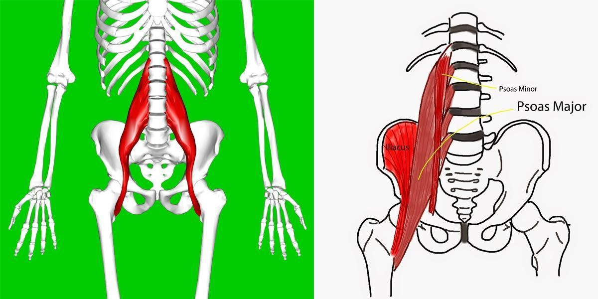 Myofascial Release for the psoas (iliopsoas) can be very helpful for relieving back pain