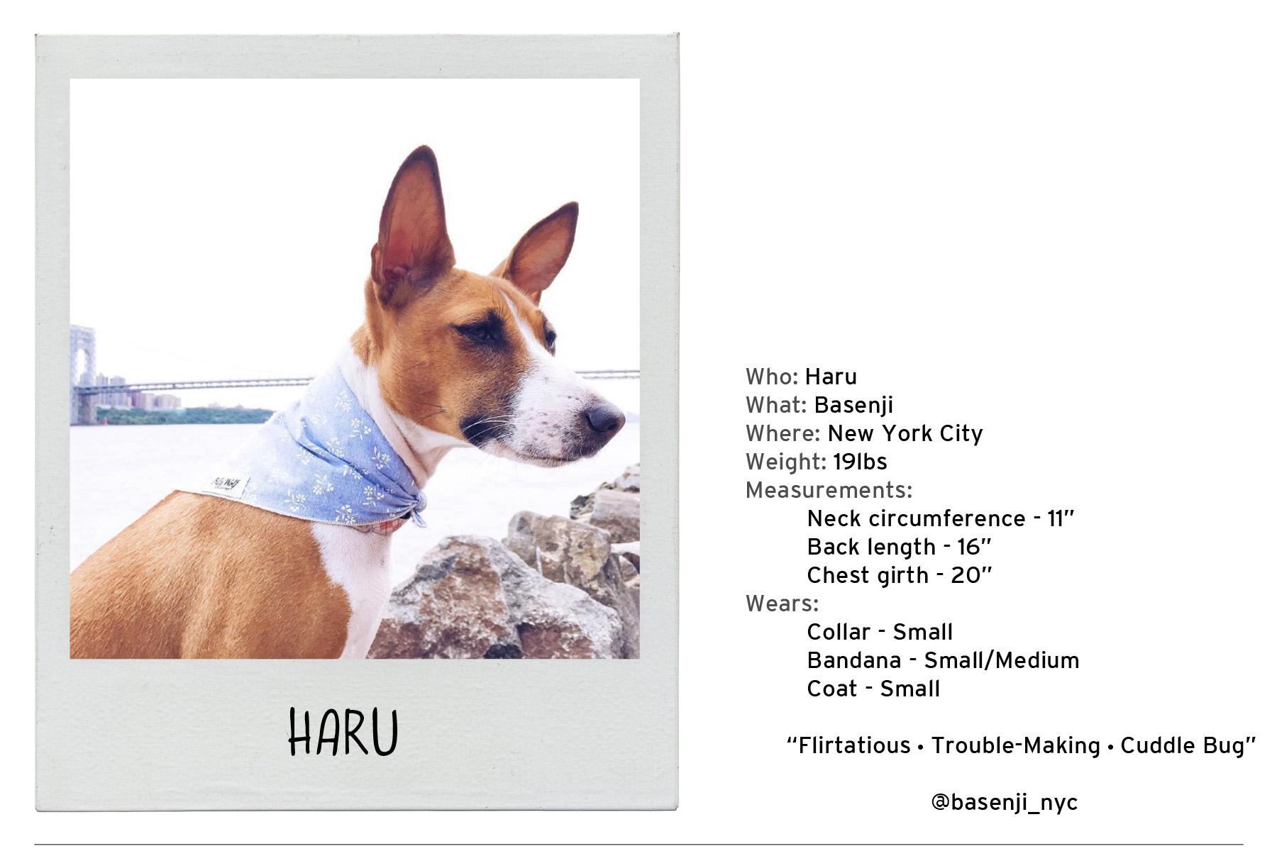 Haru-2 copy.jpg