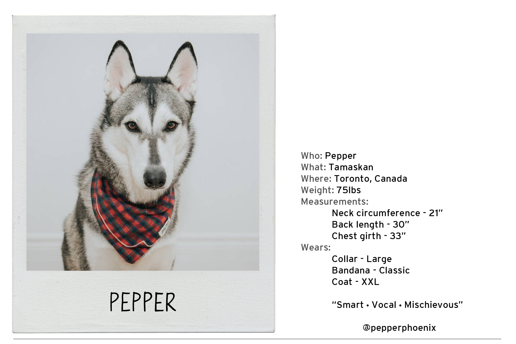 Pepper-2 copy.jpg