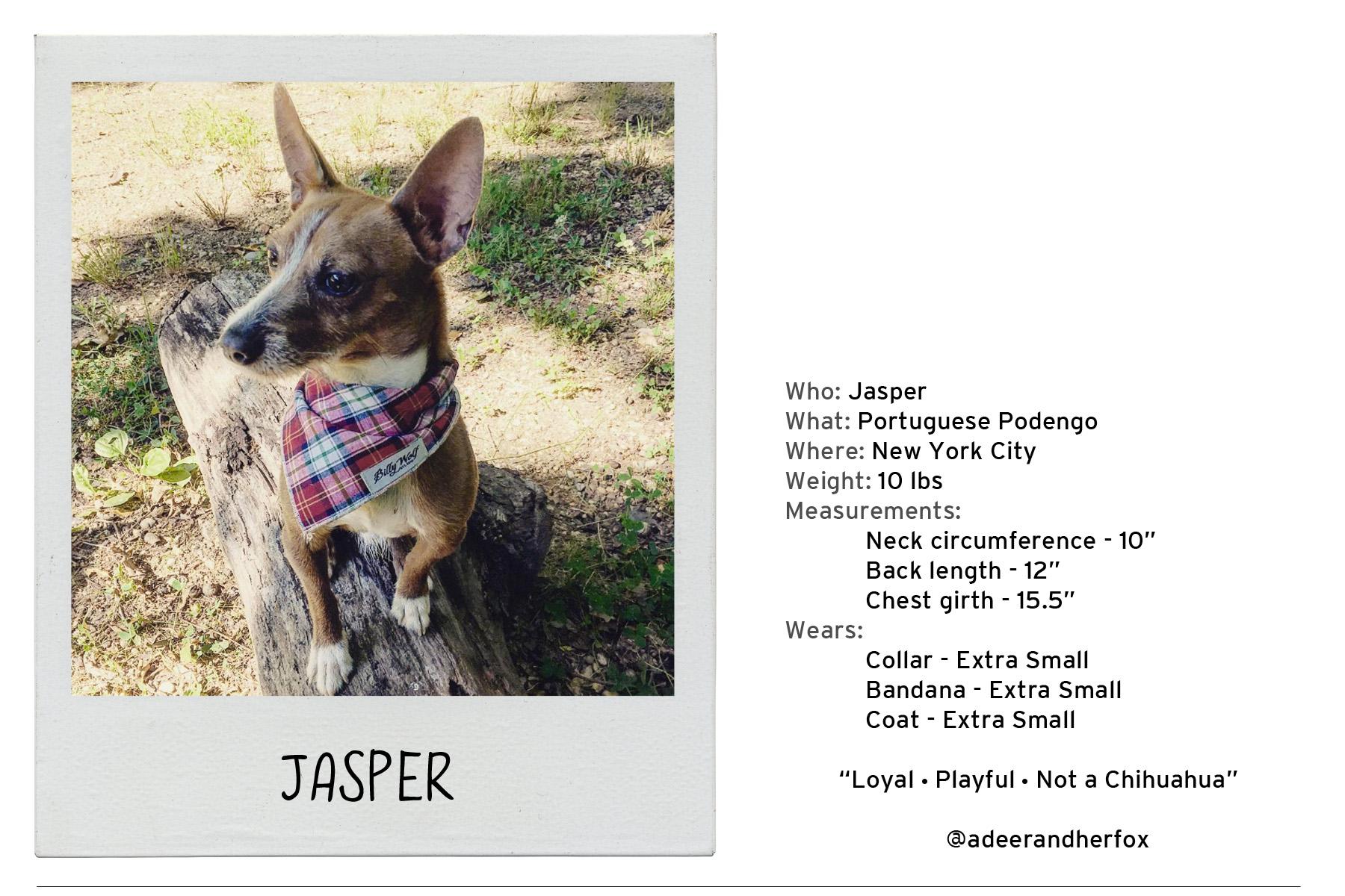 Jasper-2 copy.jpg