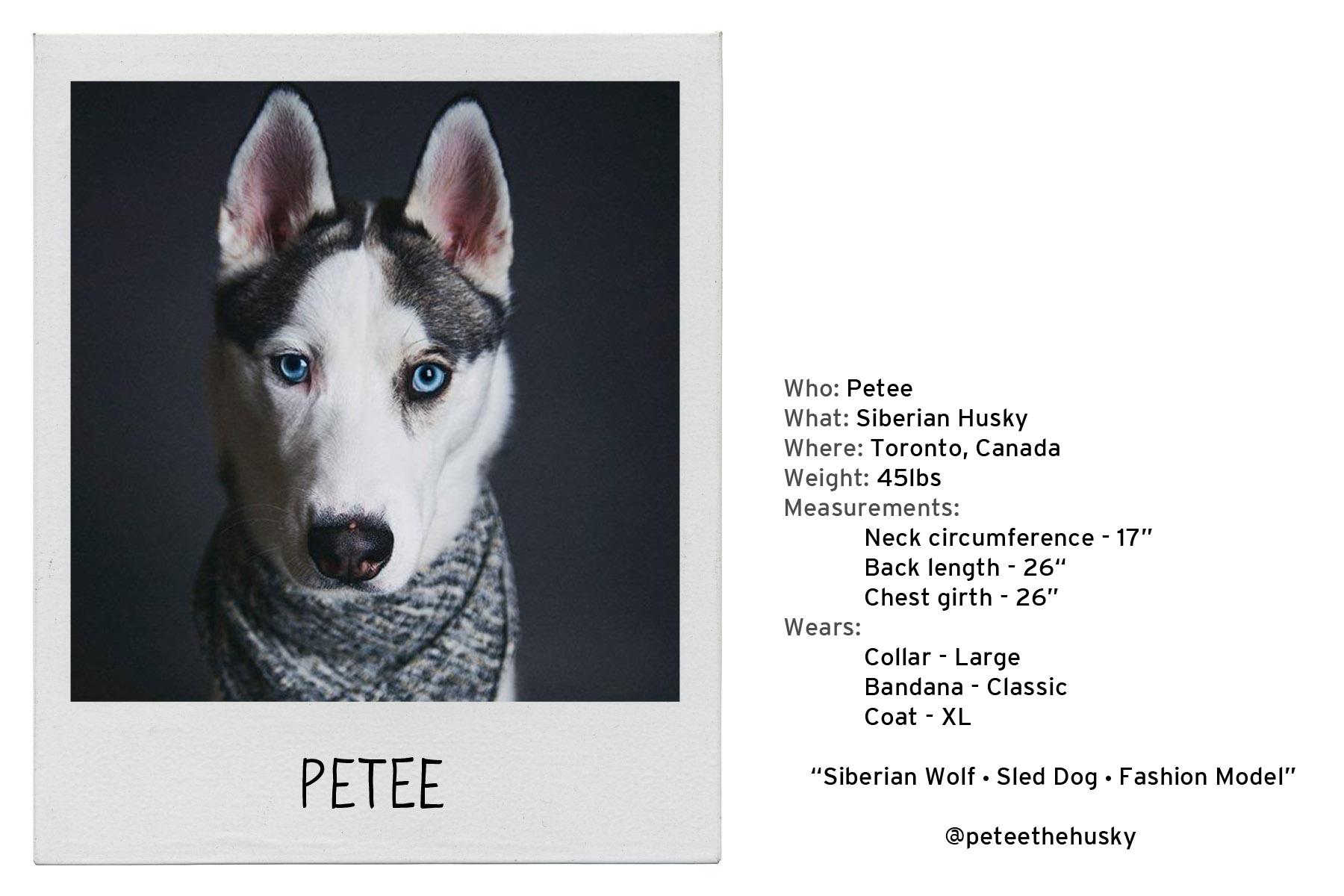 Pettee-3.jpg