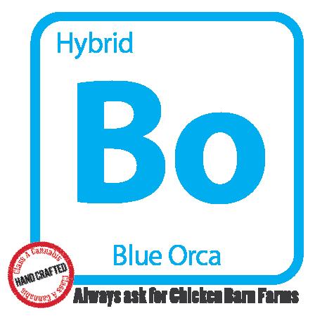 BO-01.png