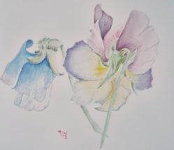 Botanical Art with Claudia Stevens