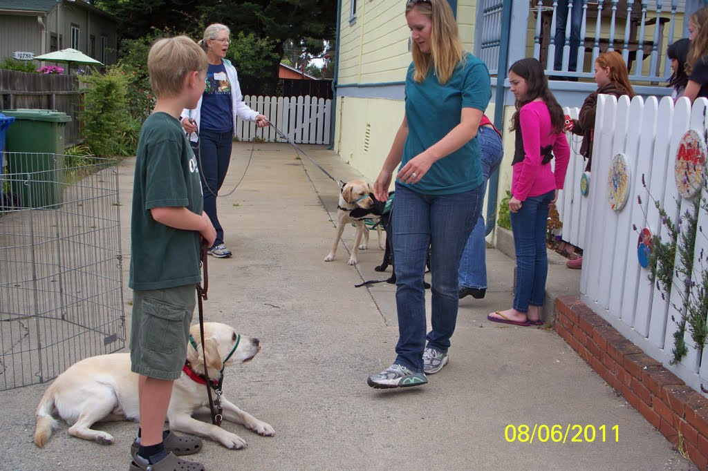 A Guide to Guide Dogs