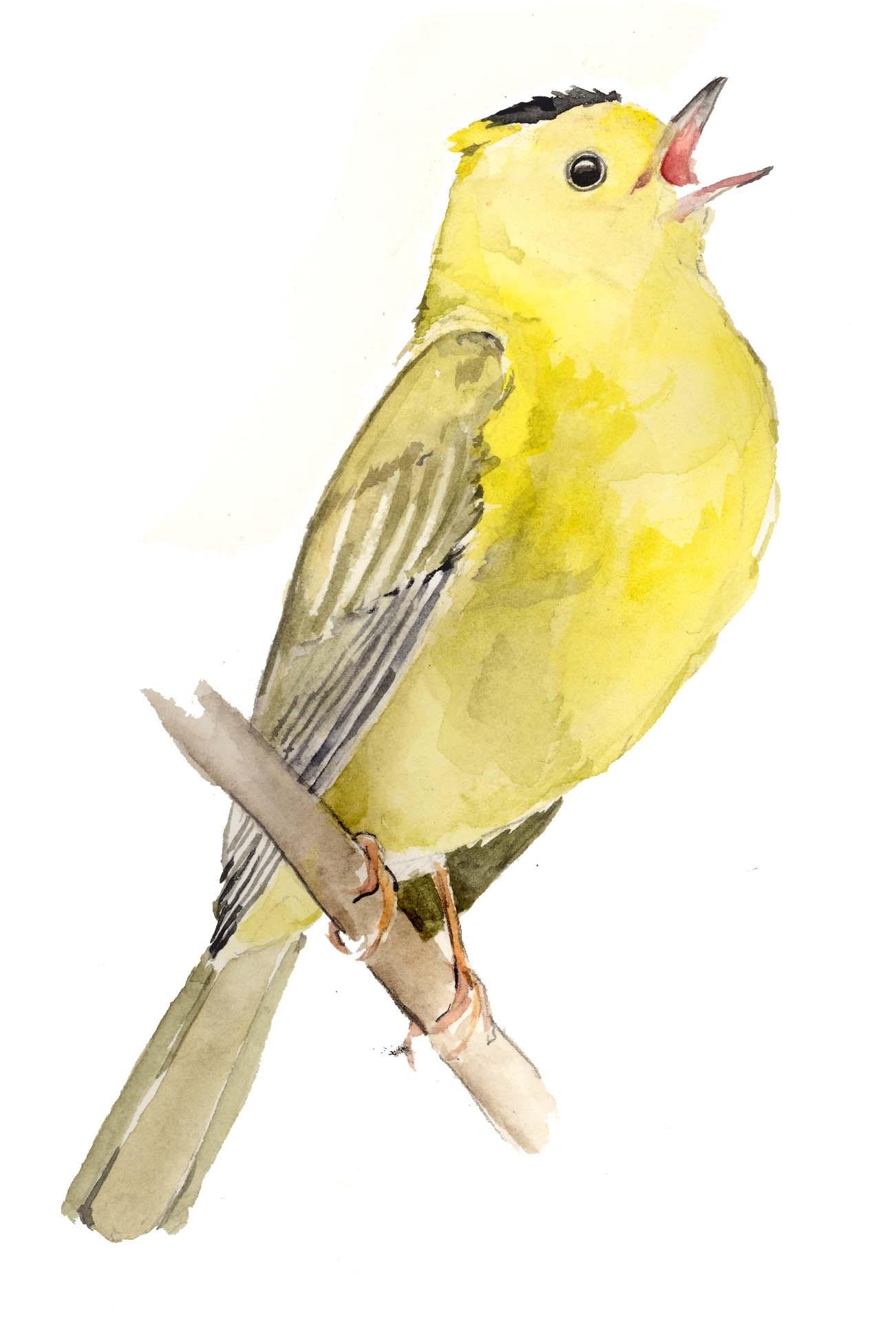 bird sketching 2.jpg