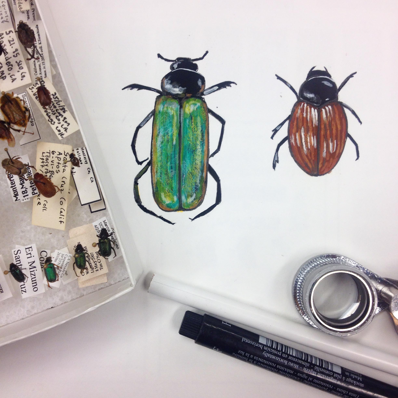 Beetles.jpg