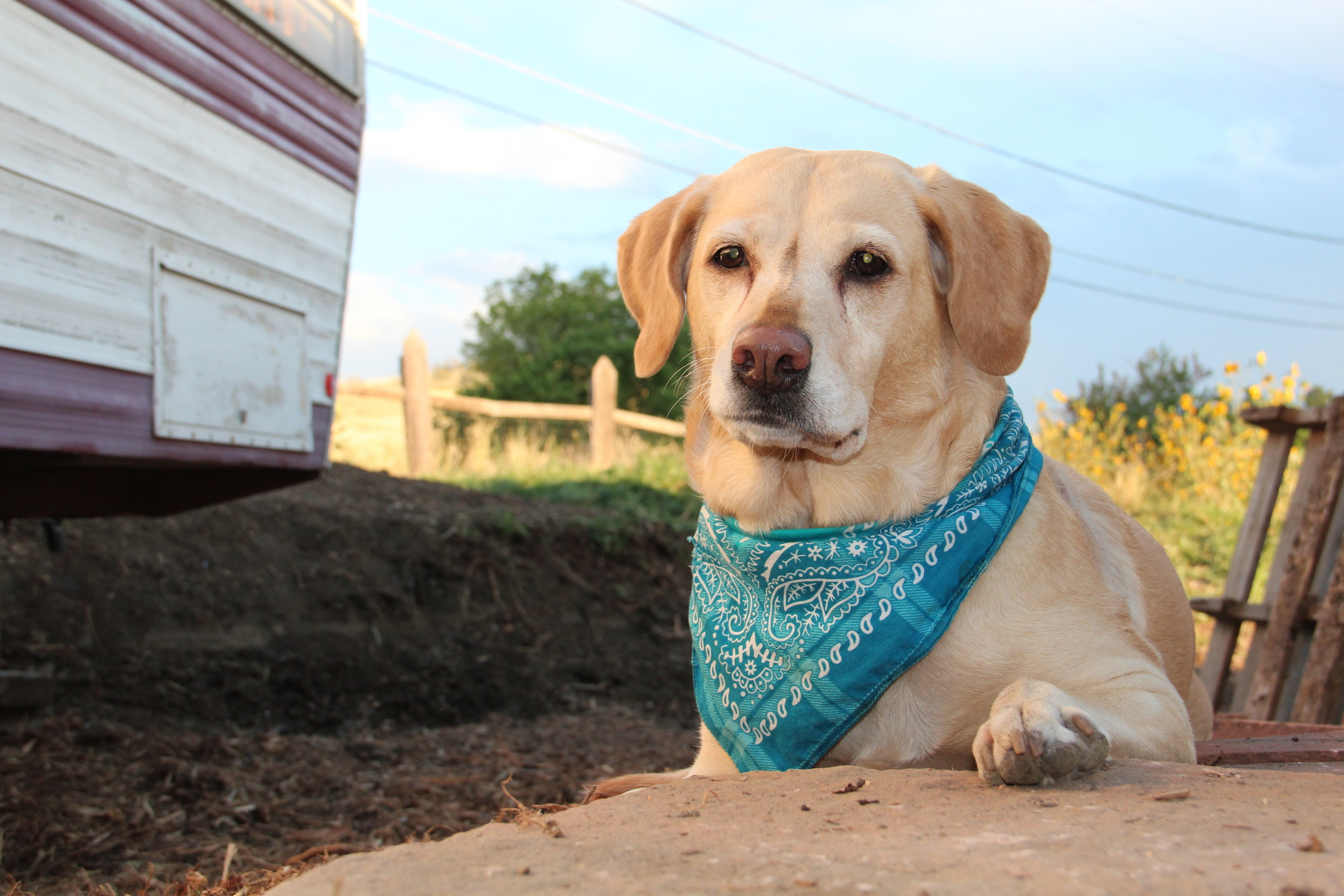 The new stones are the perfect prop for any pooch photo shoot.