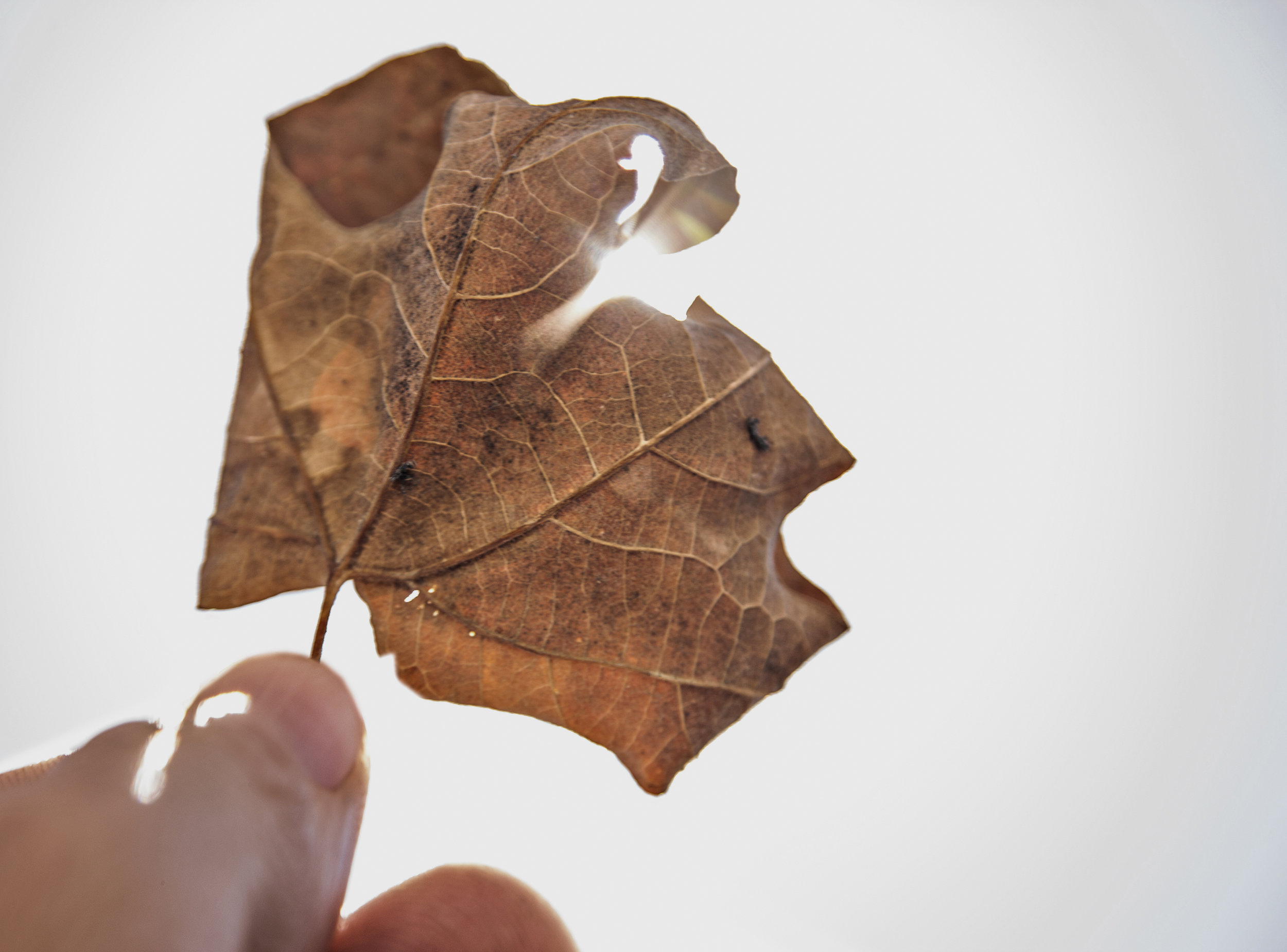 'At age 8, picking up a leaf... - The way I see my surroundings.