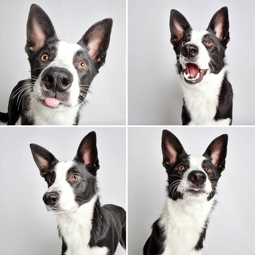 chico-photo-booth-dog-white