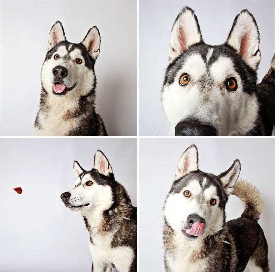 chico-husky-dog-rental-booth-photo