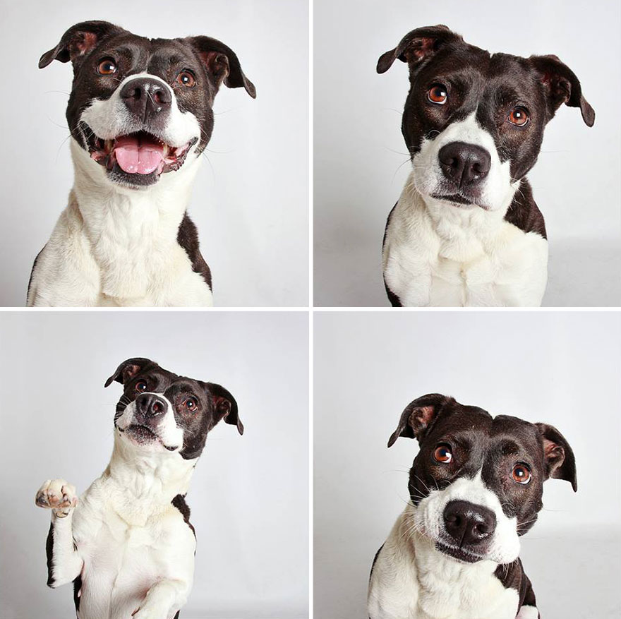 cute-dog-photo-booth