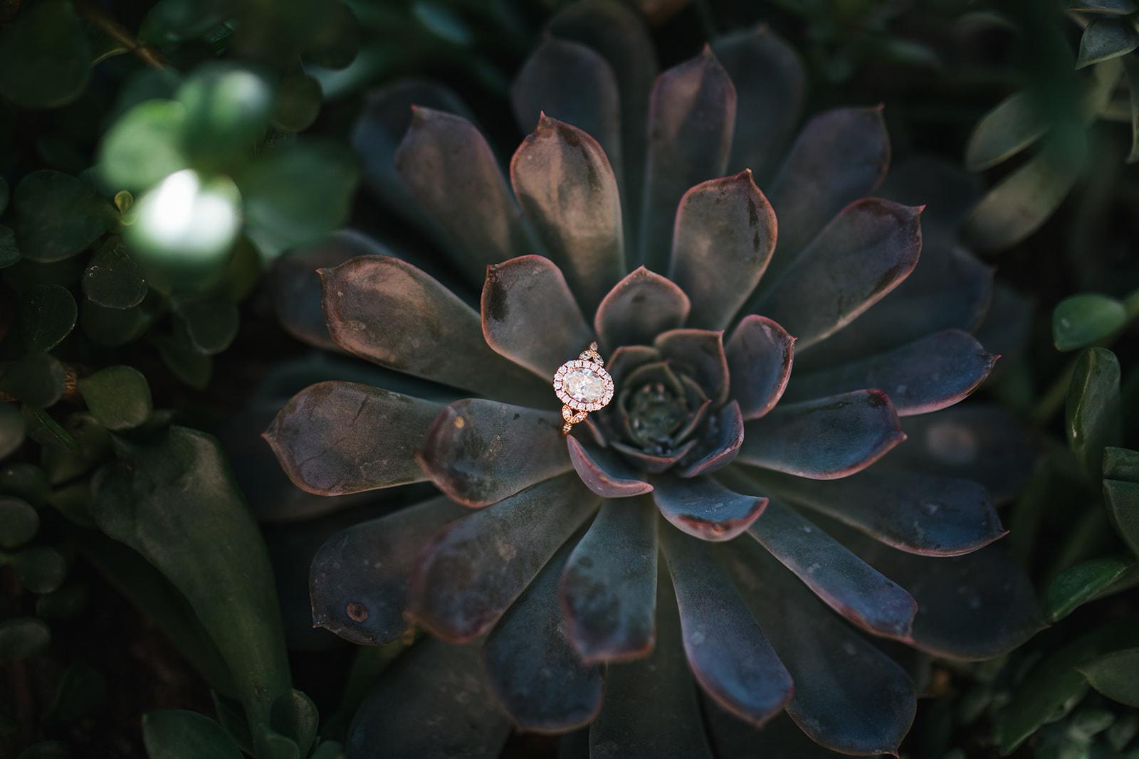 engagement-0375.jpg