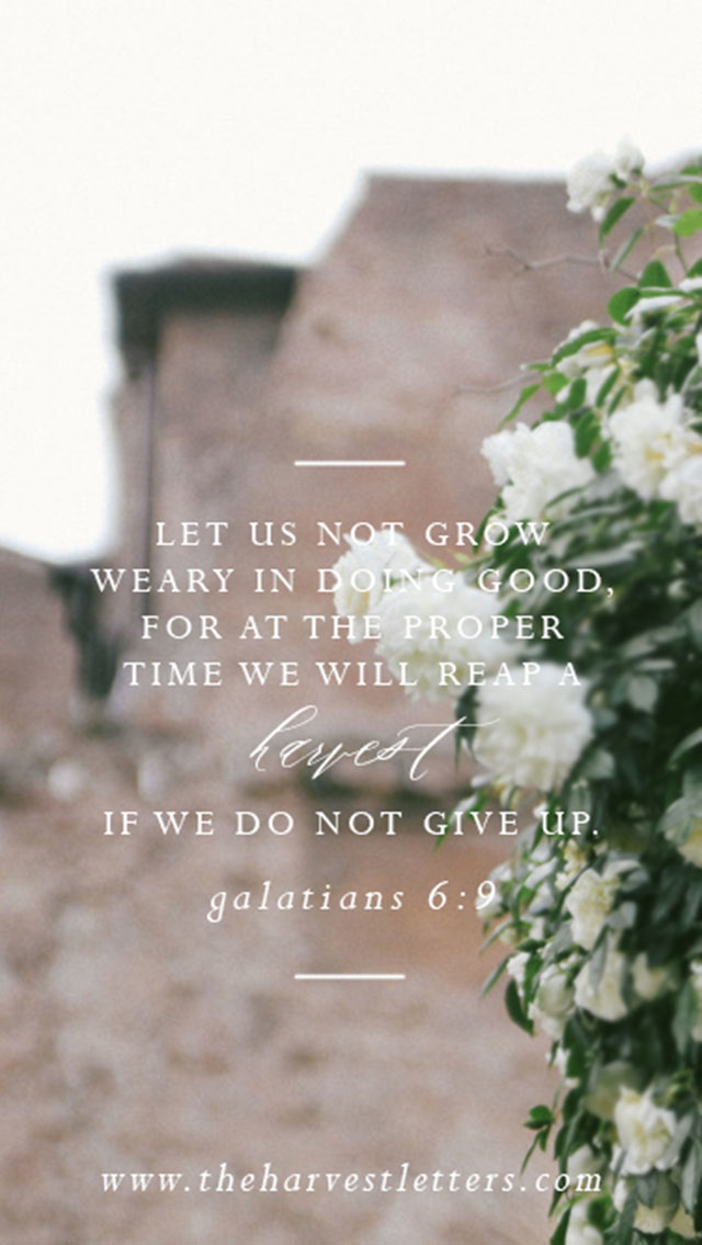 Galatians-6.9-the-harvest-letters.jpg