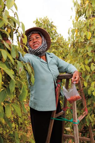 Pepper from Cambodia's Kampot region was once world renowned, but the industry almost disappeared under the Khmer Rouge. Now, a new initiative is spicing up the region's growers.  Tom Vater  reports