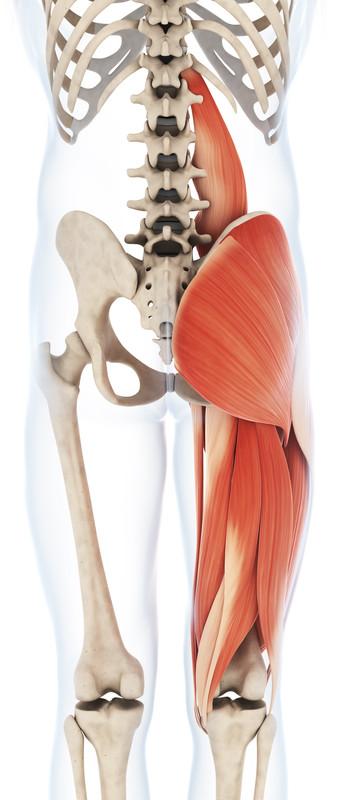 Spieren achterzijde van het bovenbeen (Hamstrings)