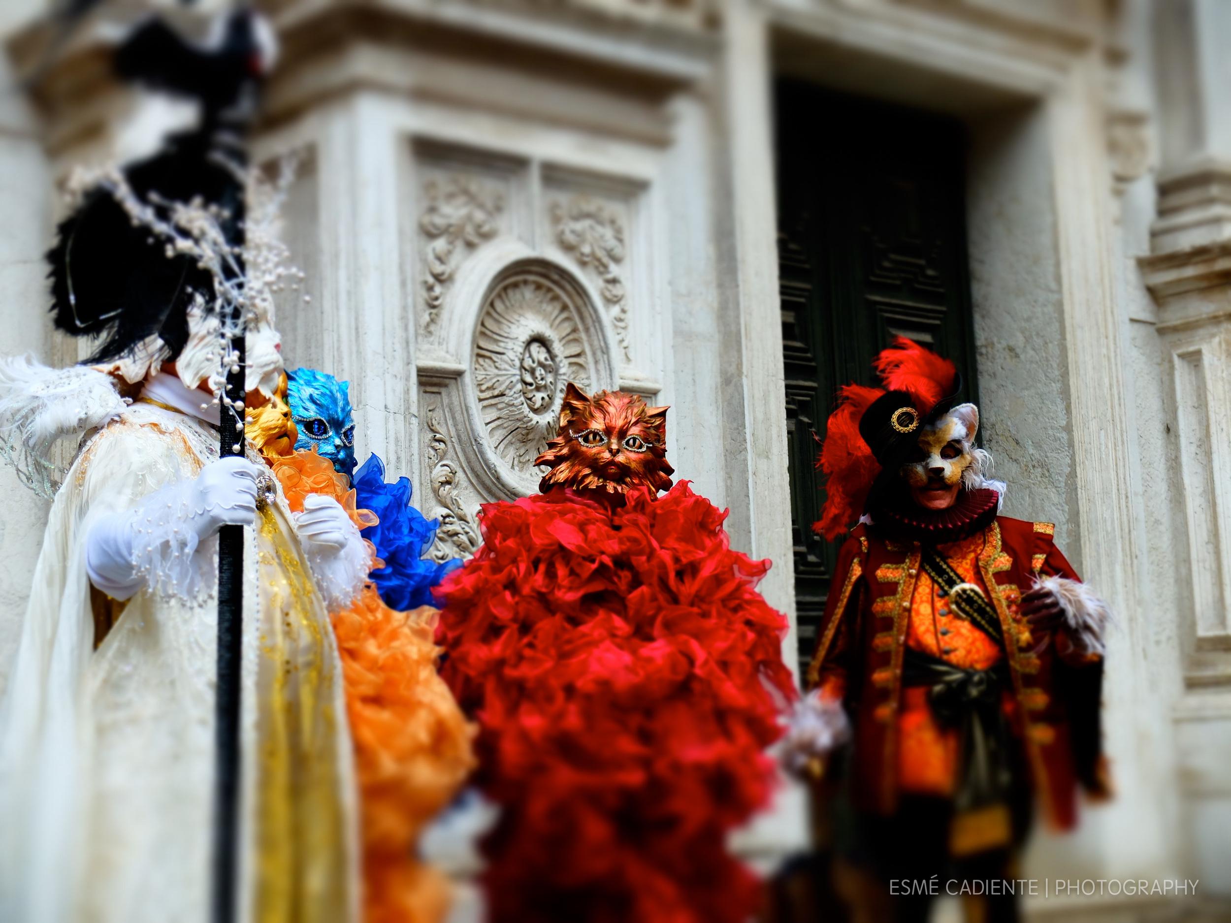 venetian cats carnival