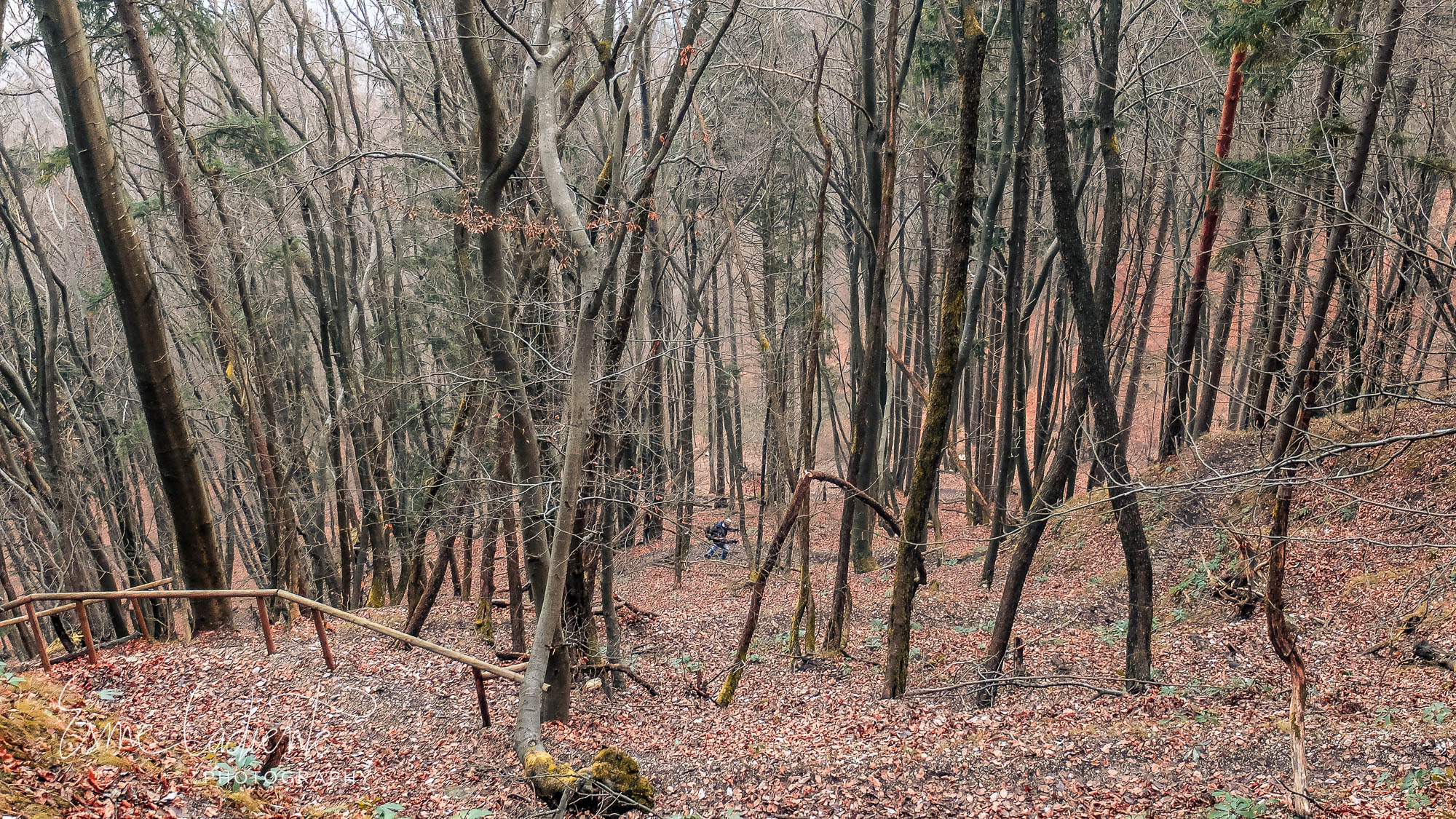 The naked forests give way to winter.