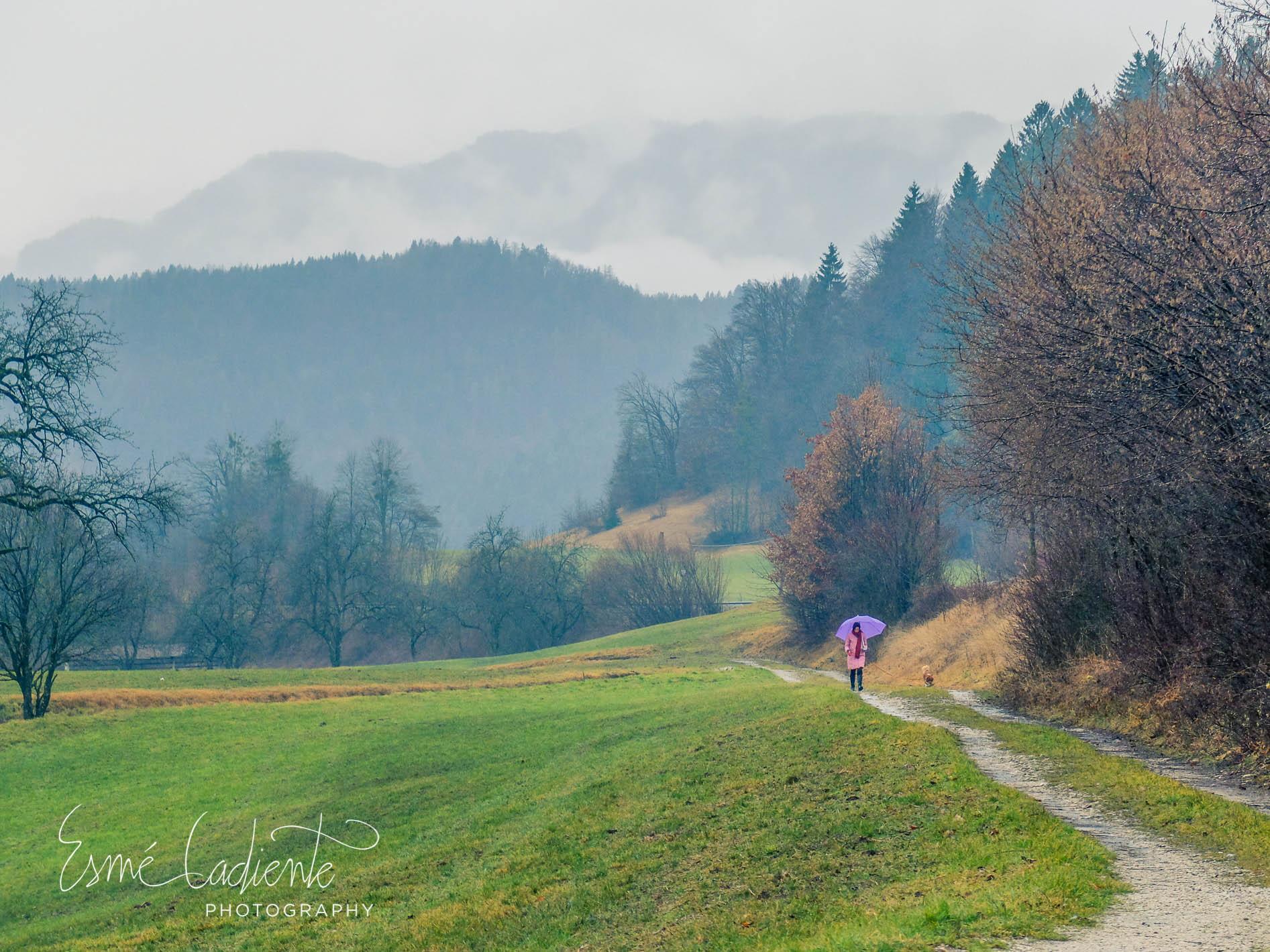 Mist envelopes the emerald valley