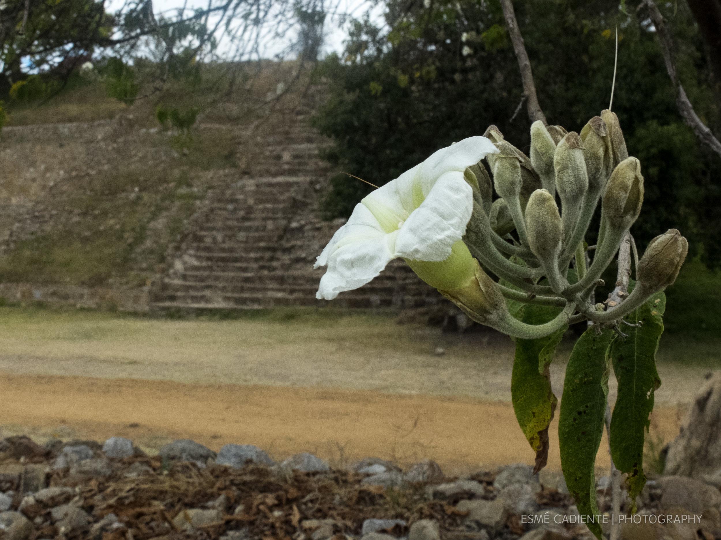 13Feb_Oaxaca1_120.jpg
