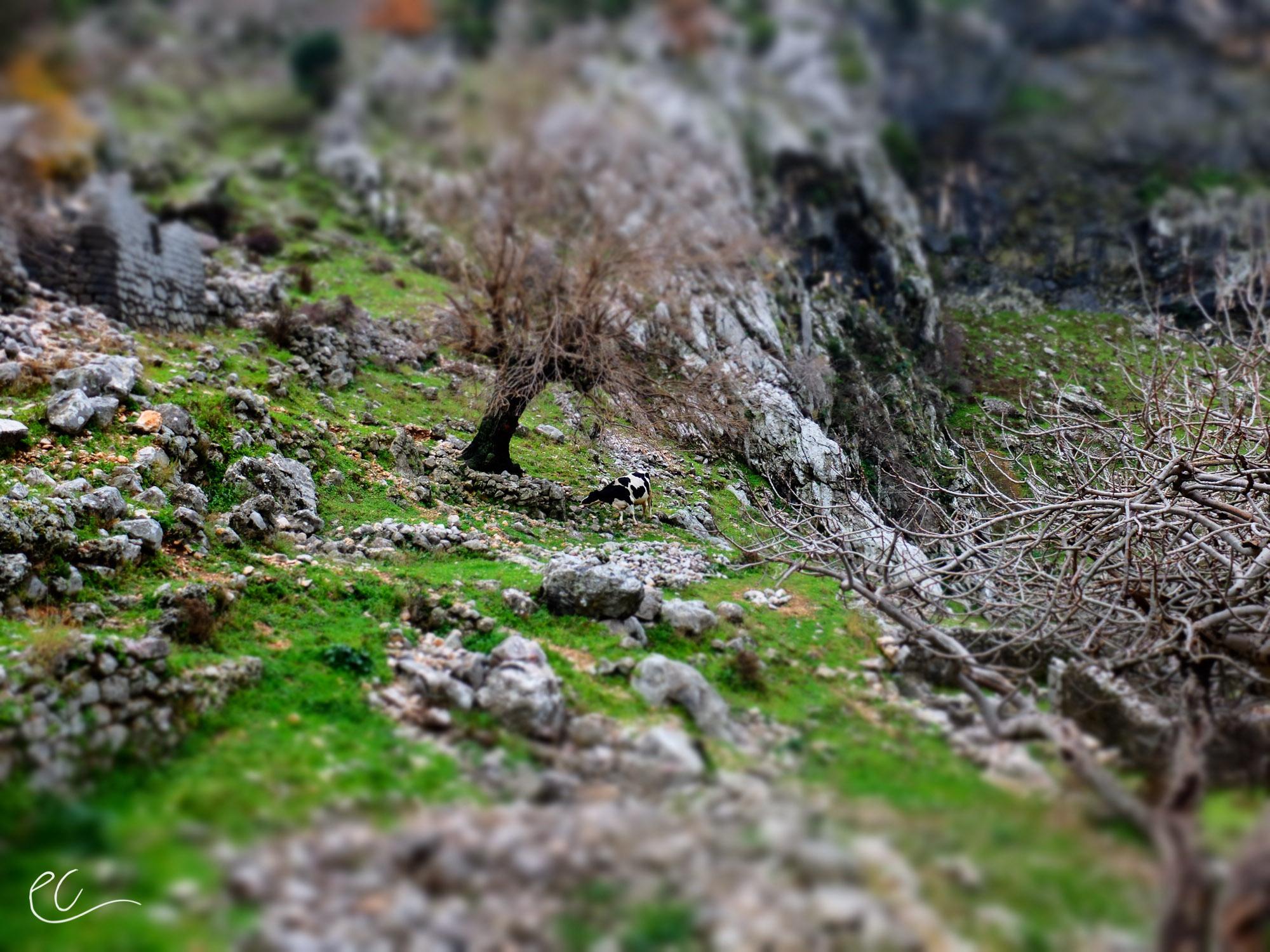 2014_Montenegro-98.jpg