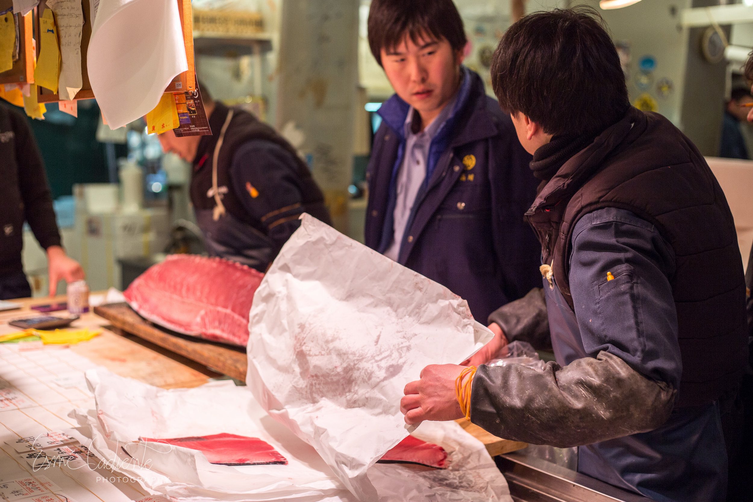 tuna Tsukiji fish market
