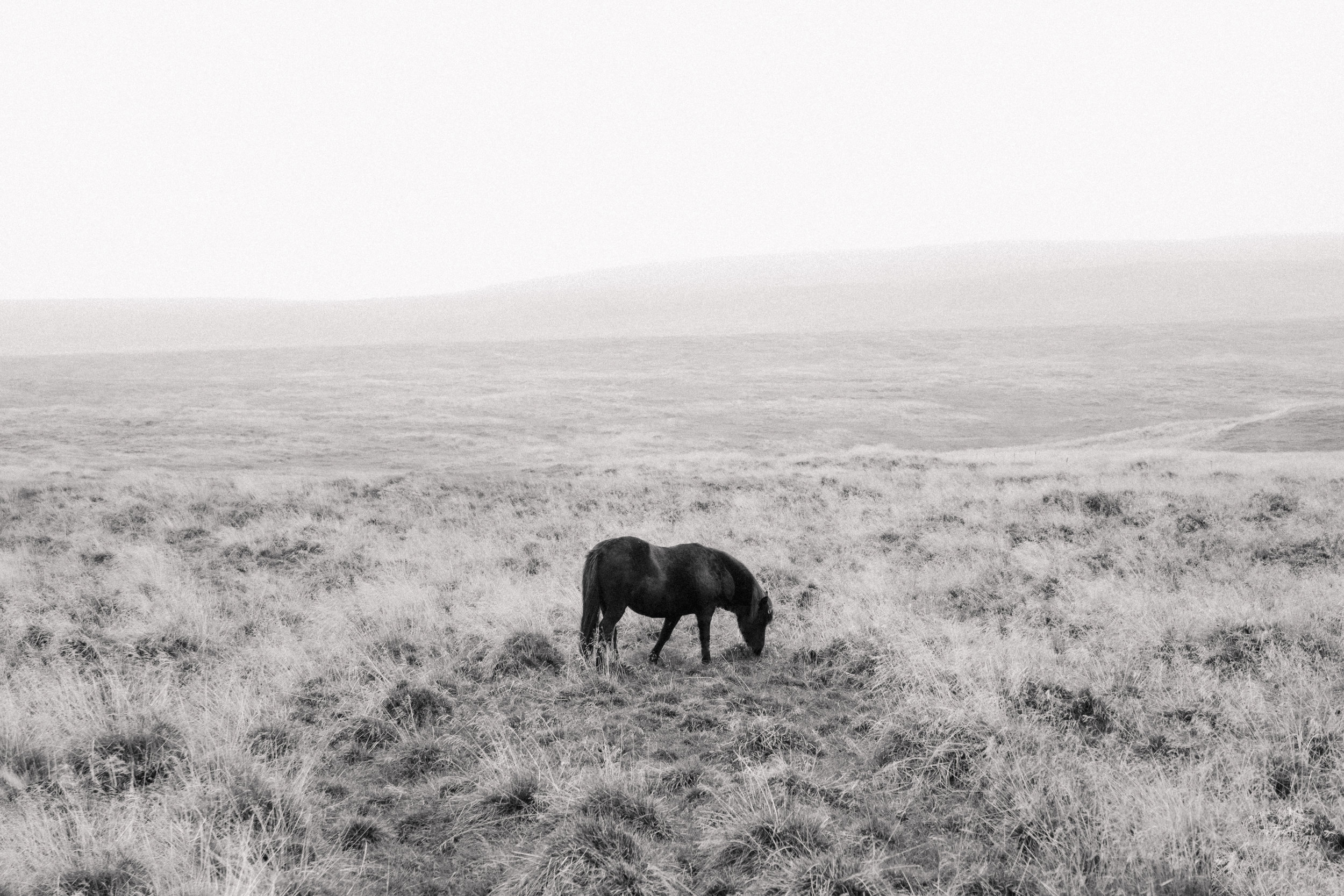Hvítserkur-Iceland-9.jpg