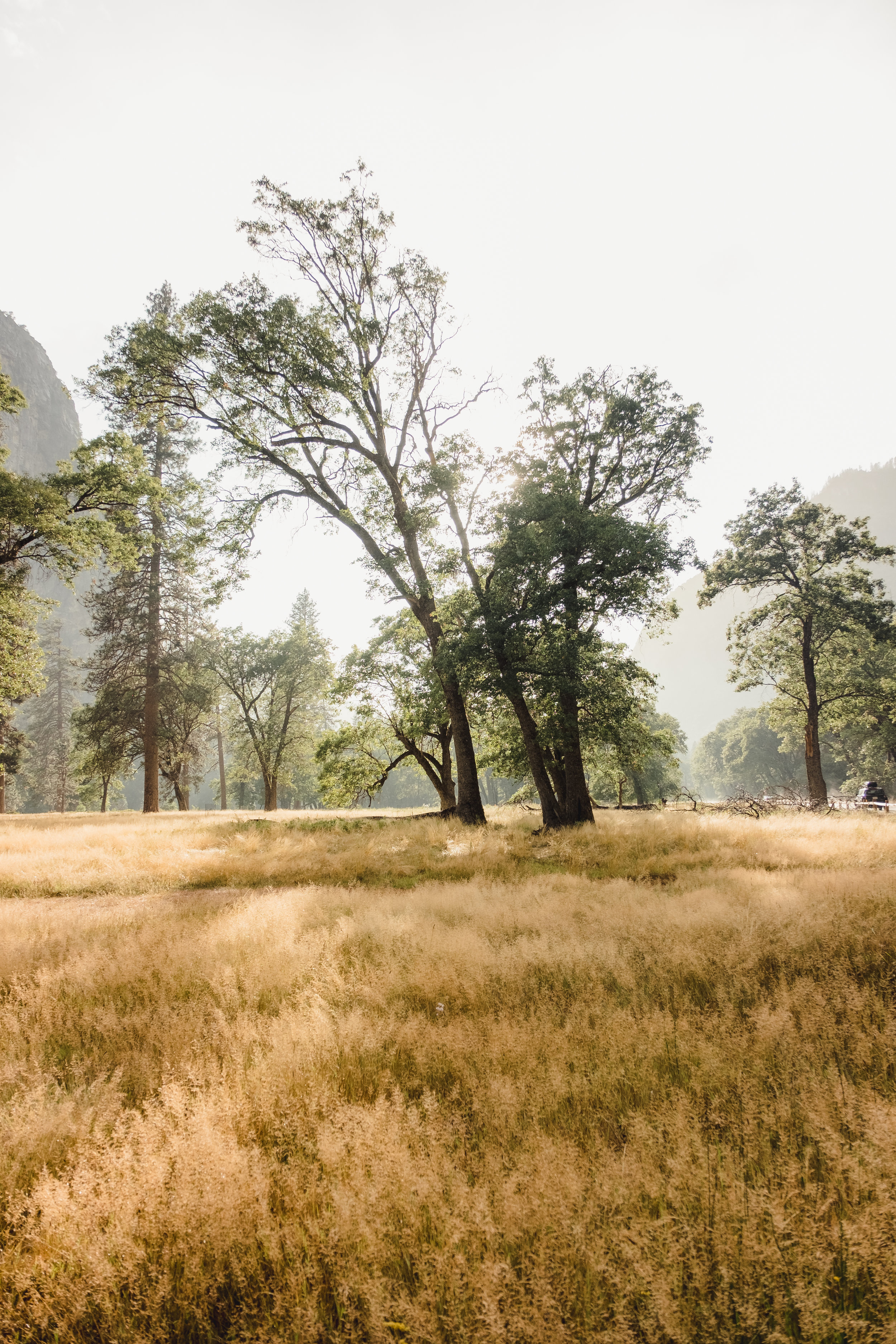 Meadow, Yosemite National Park
