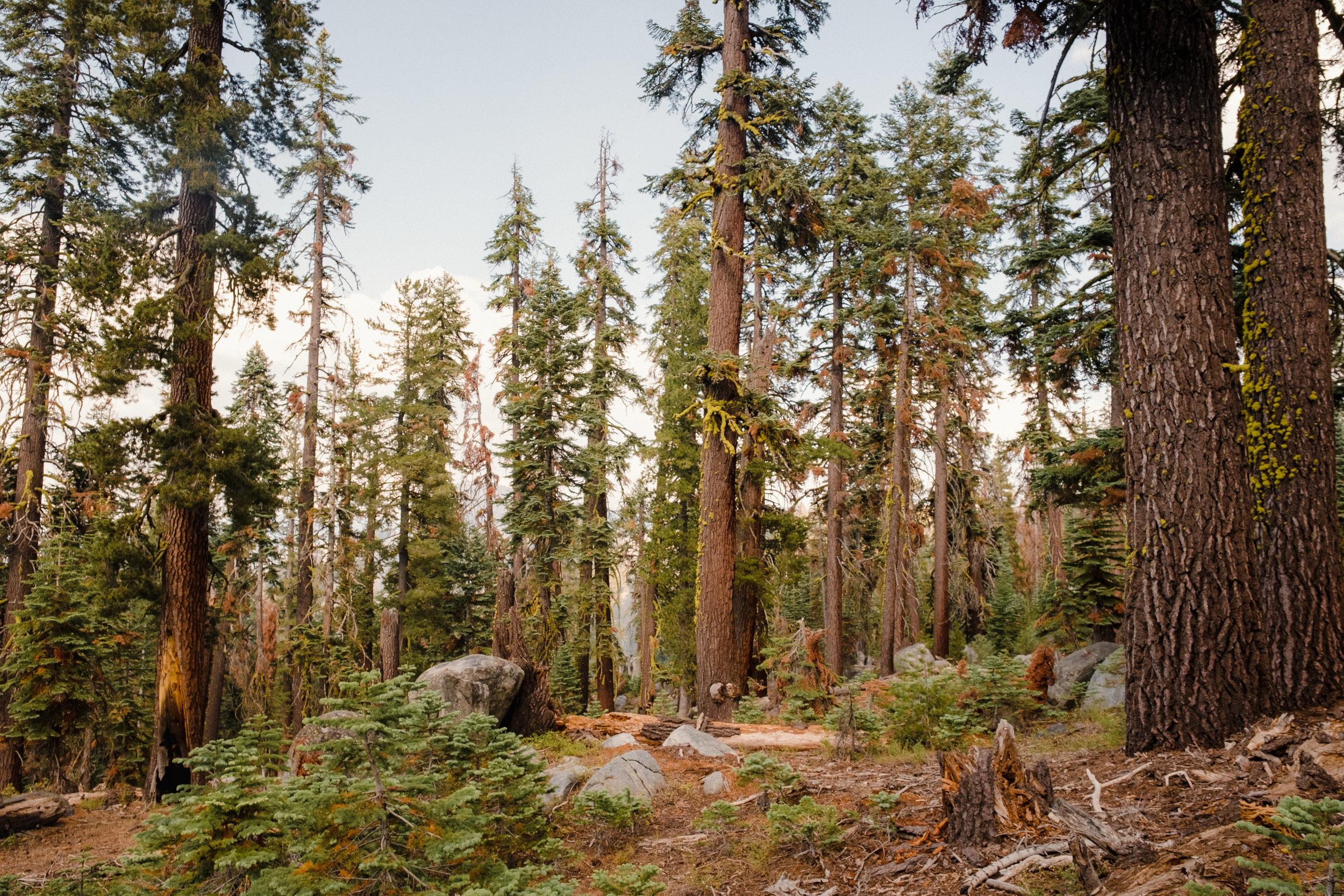 Yosemite_National_Park4.jpg