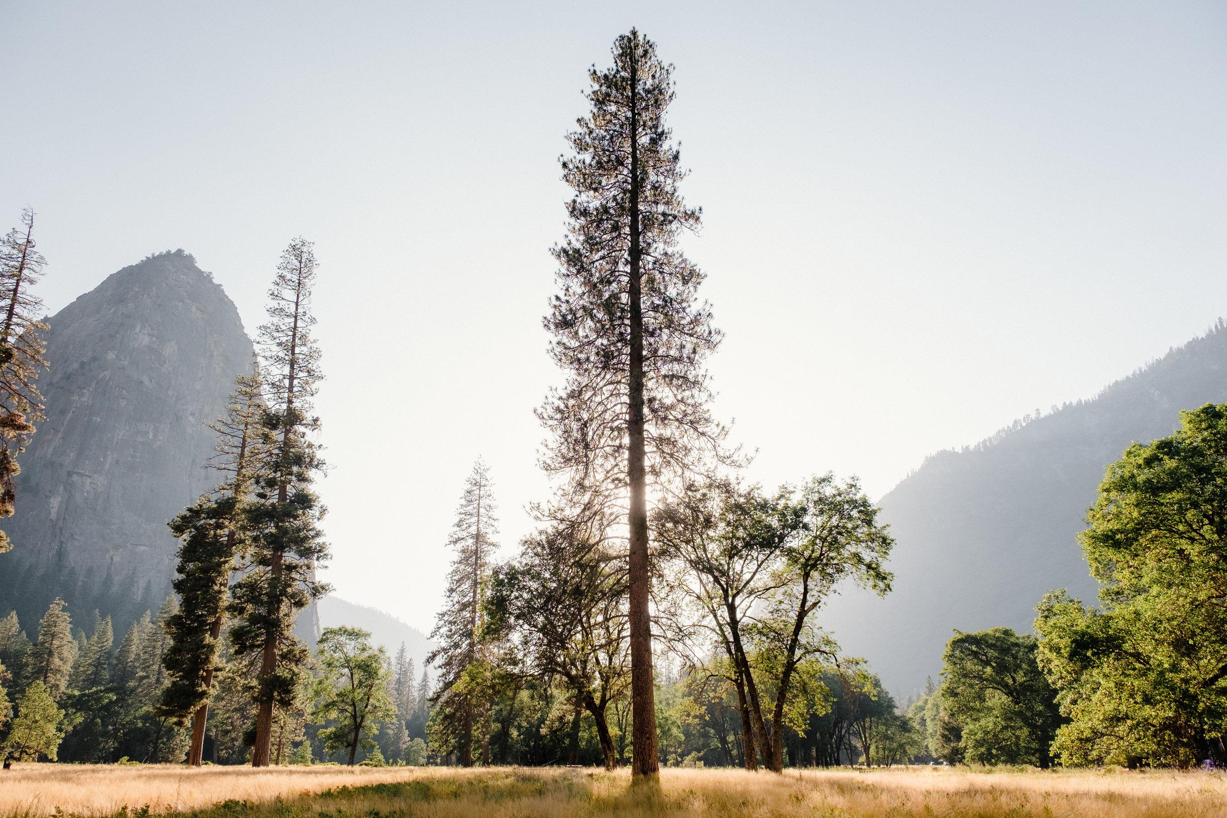 Yosemite_National_Park7.jpg