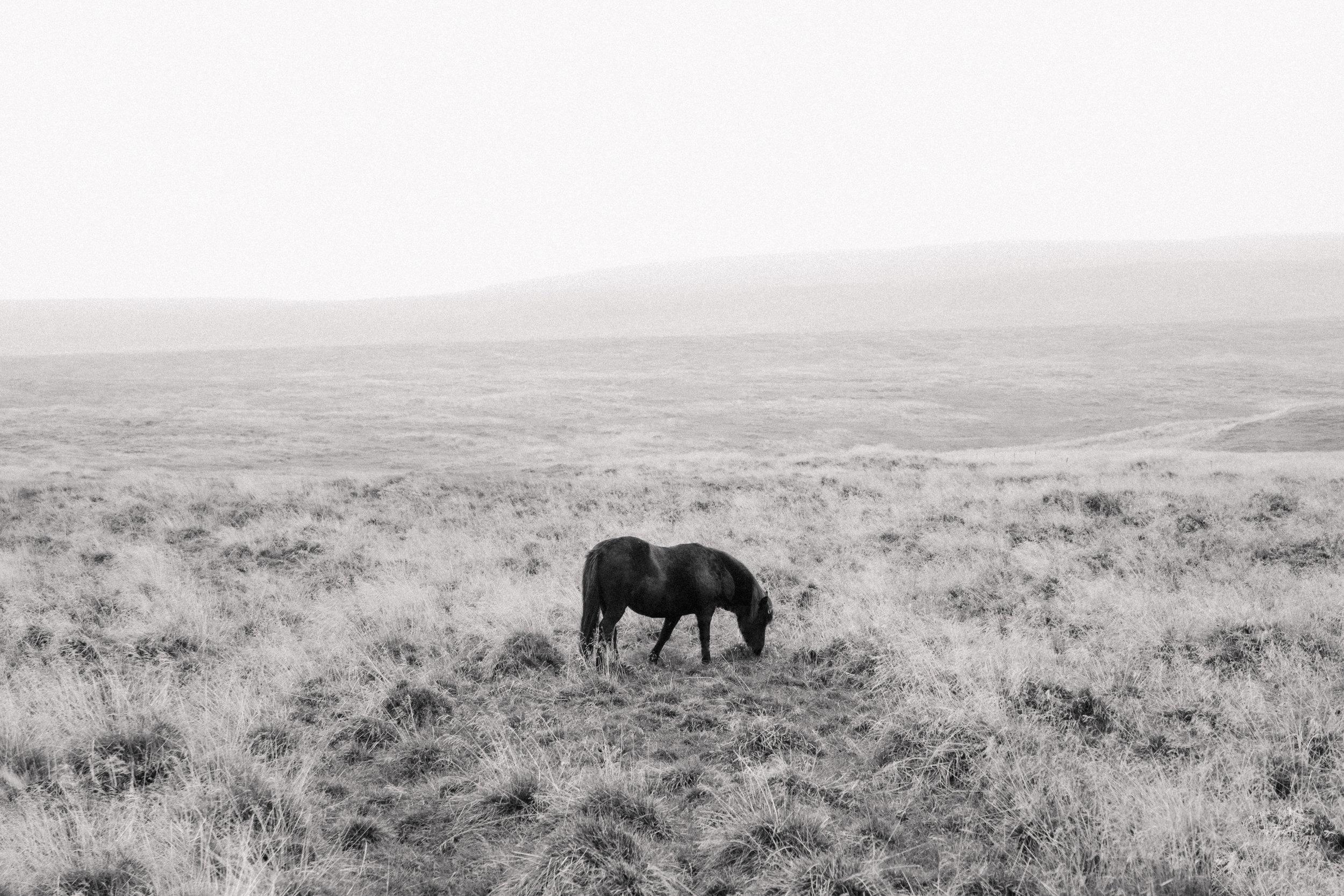 Iceland18.jpg