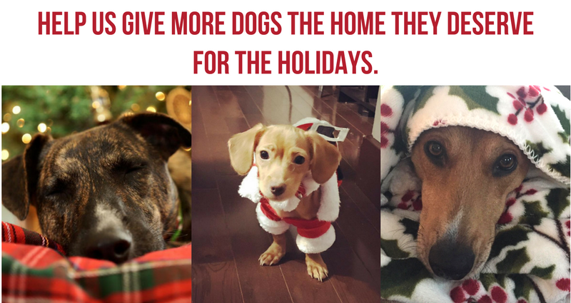 Home Page Holiday Image.png