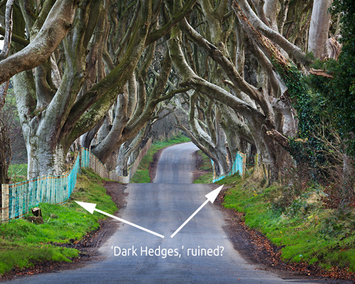 dark hedges disaster