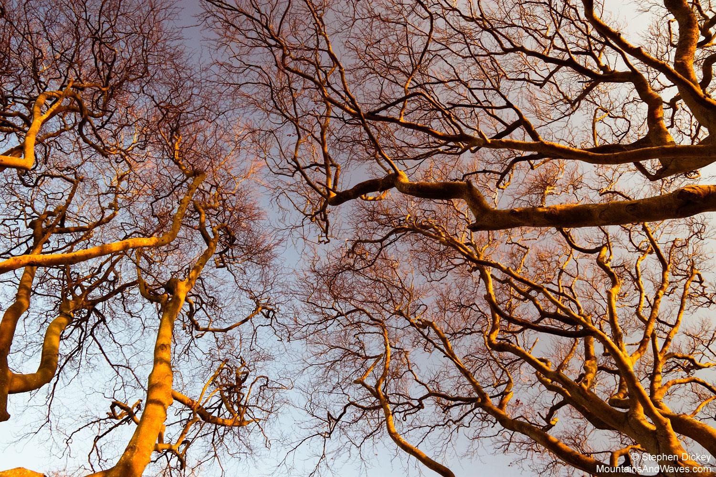 Dark-hedges-2.jpg