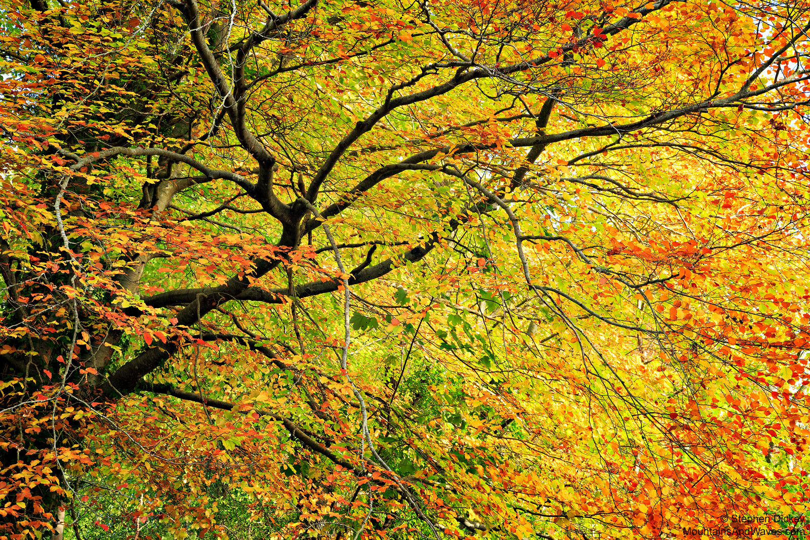 Roe-Valley-Autumn-Colours-Northern-Ireland-Landscape-Photography.jpg
