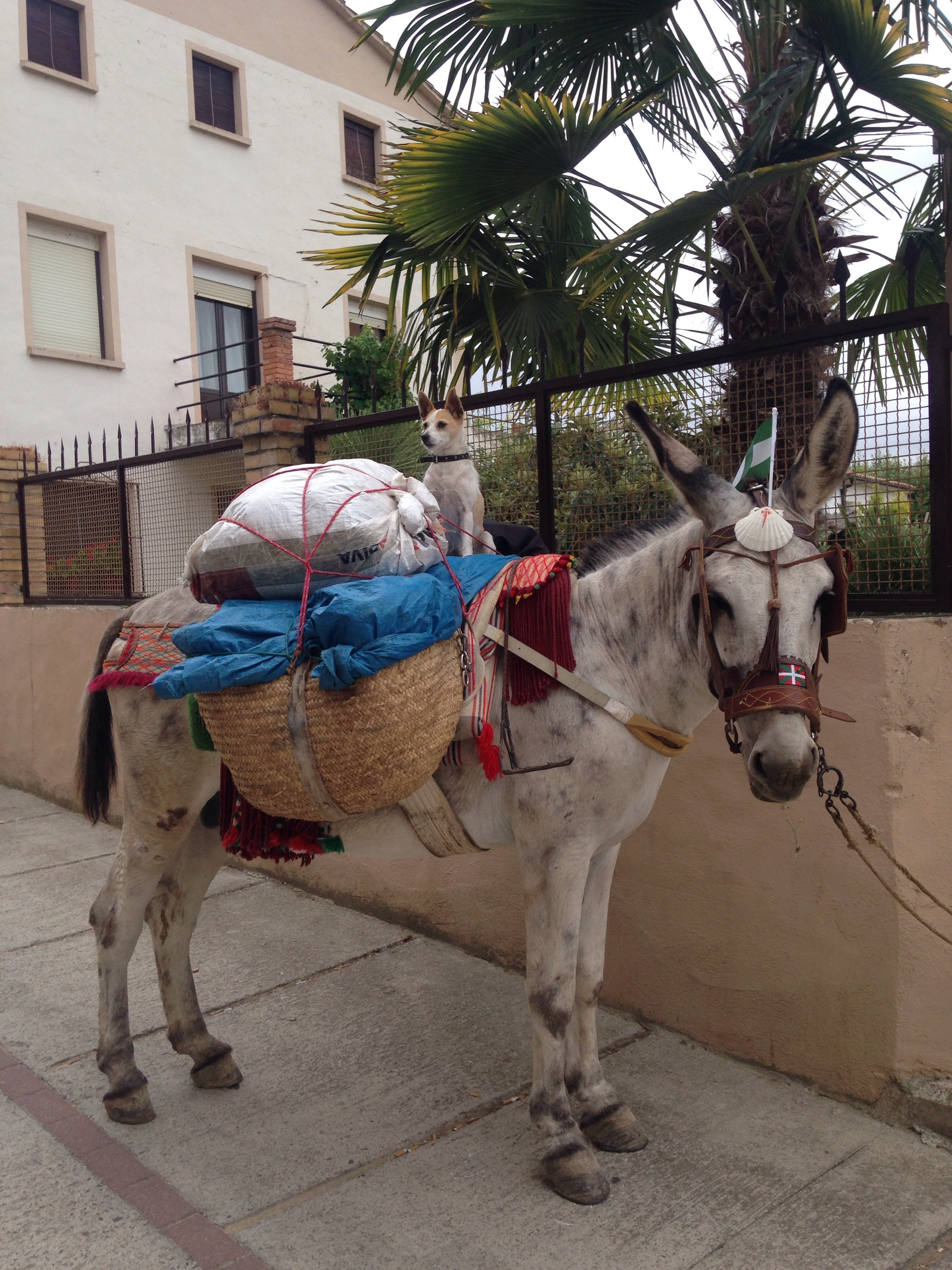But I caught up. Note the shell on the donkey... They are in pilgrimage too!