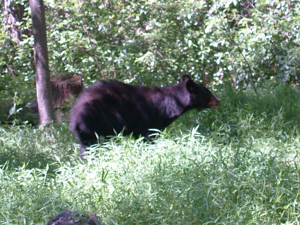"""One of the """"furry friends"""" that frequented many campsites this summer."""