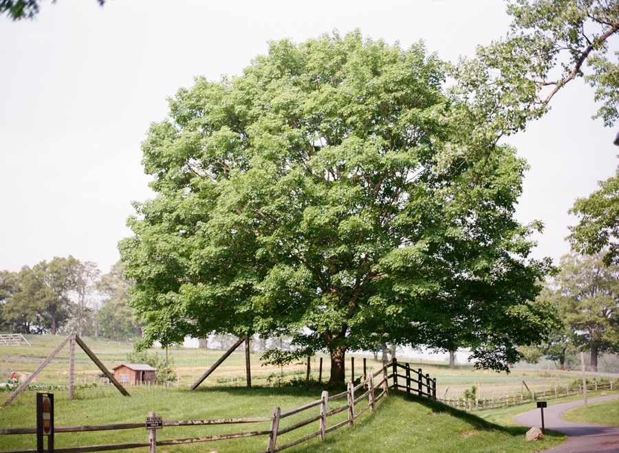Blue_Hill_at_Stone_Barns_Wedding_AS_0002.jpg