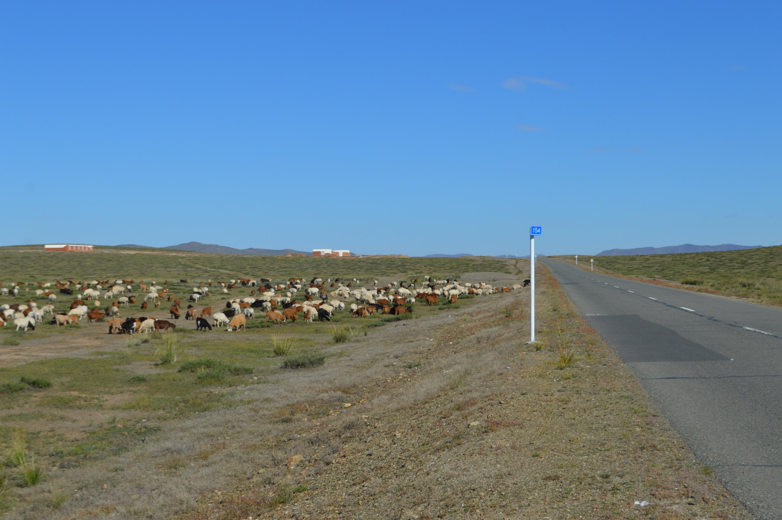 A large herd of sheep and goats near the roadside