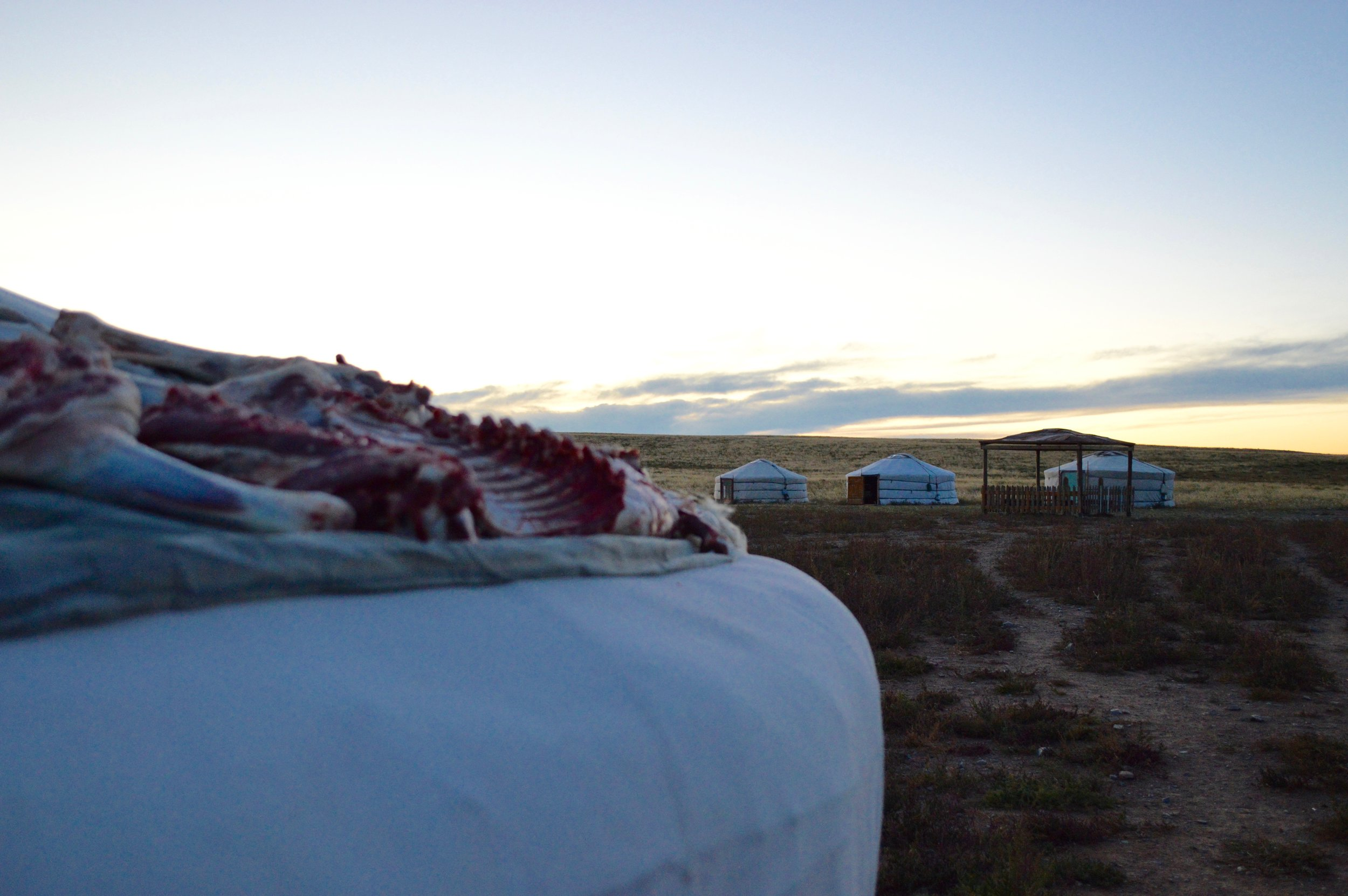 Pieces of sheep meat on top of the ger (yurt)