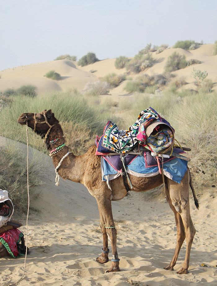 A camel in all his finery, love the blankets.© Claire Orrell 2015