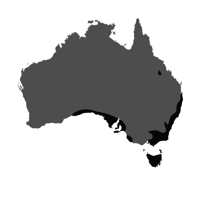 Totemica_Wombat_Distribution