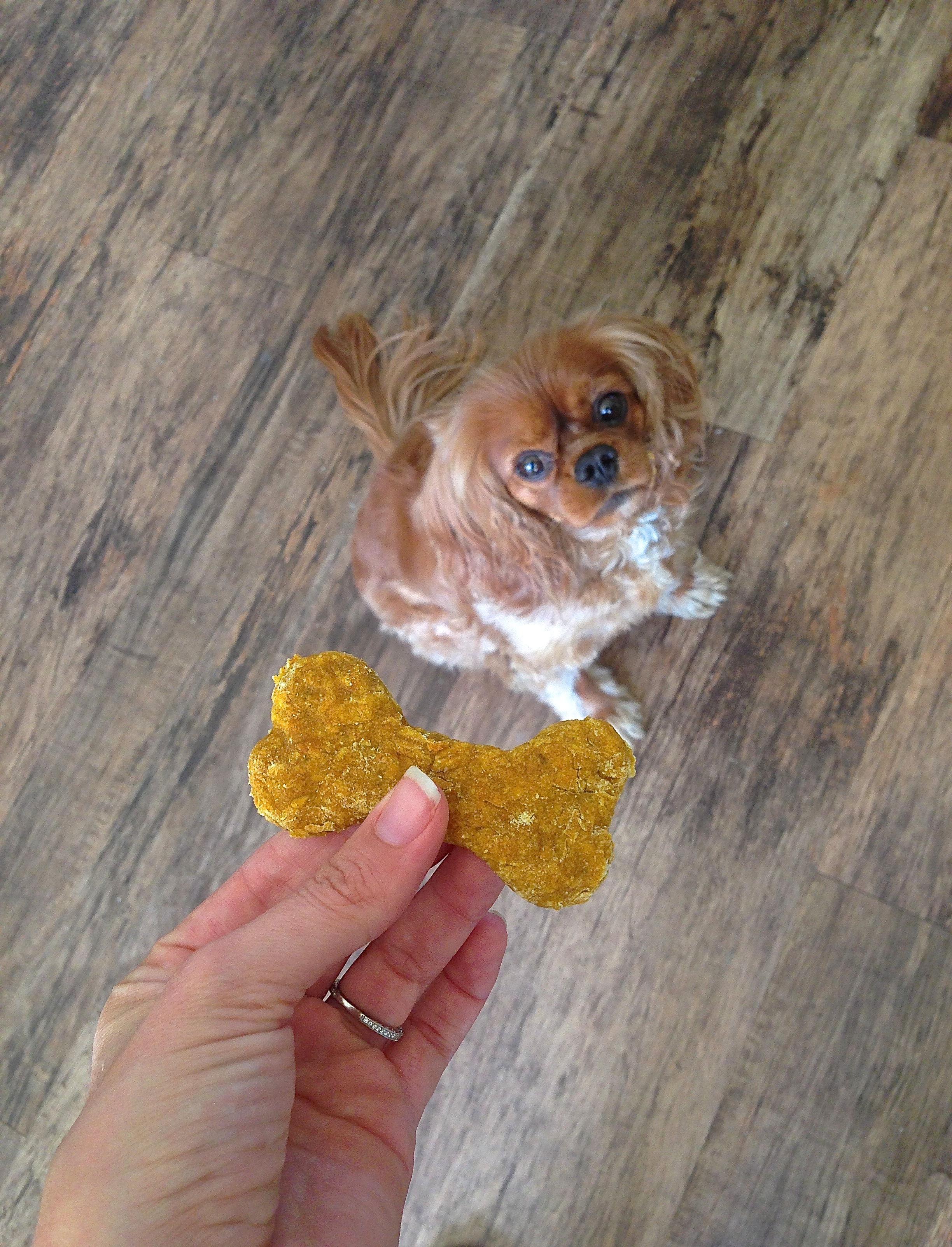 Pumpkin Oatmeal Dog Treats | Kneading Home