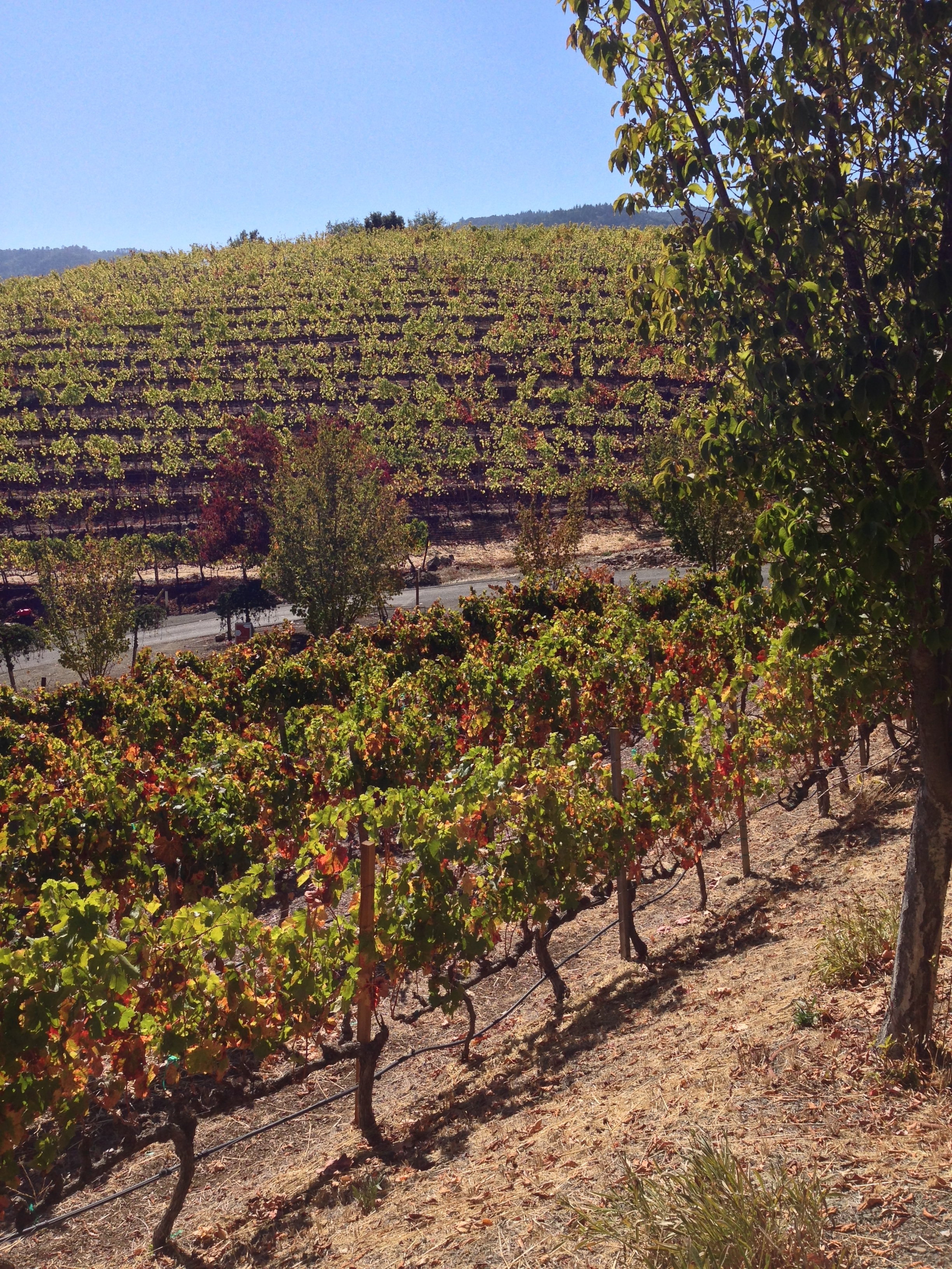 Napa & Sonoma County Food & Wine Guide | Kneading Home