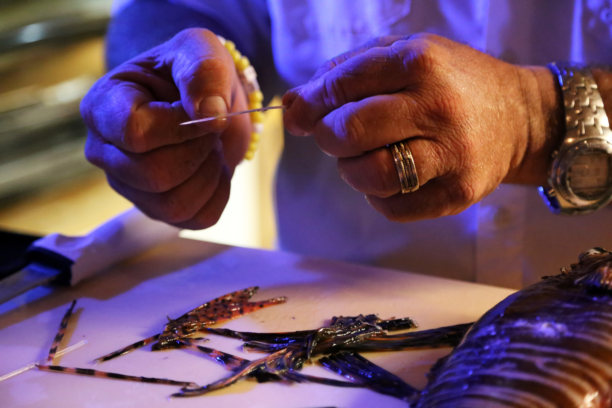 John Mirabella of Castaways in Marathon Key removes spines from a lionfish in preparation for lionfish sushi.