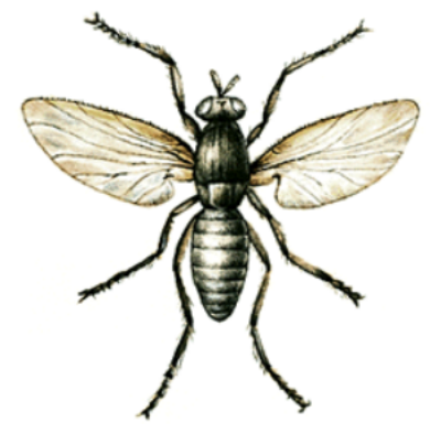 This is a gnat. Let the observer note that it is different from NAT