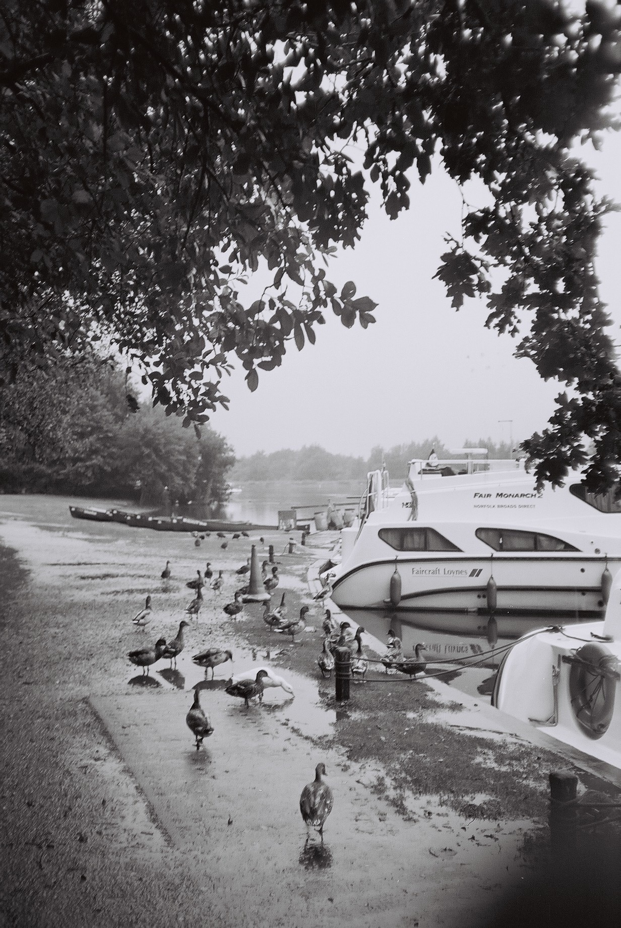 Ducks, boats, and rainy holidays