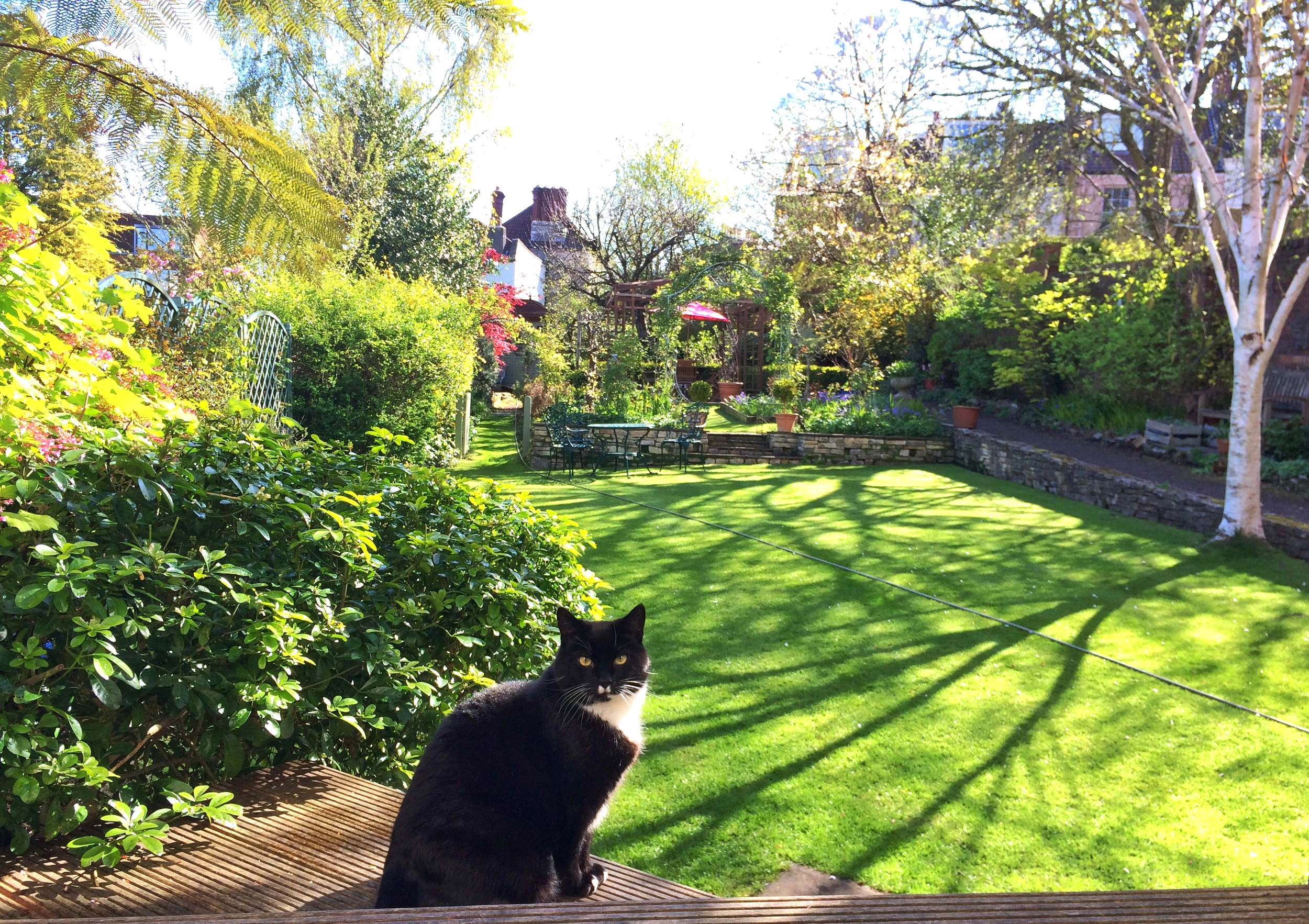 Sparky the cat guarding is territory like the boss that he is
