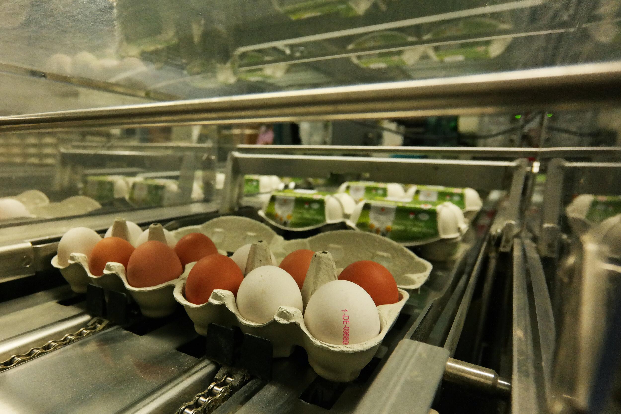 Automatische Schließung der Eierschachteln