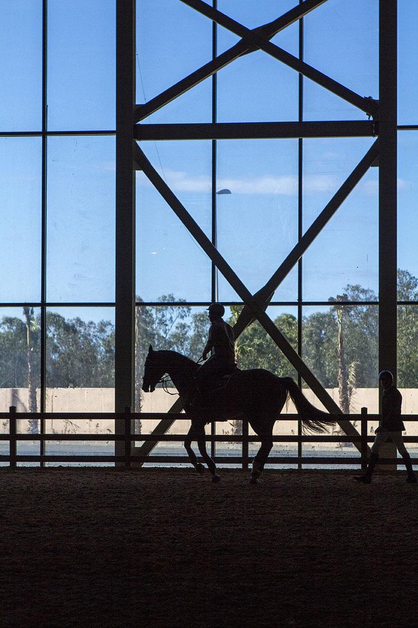 A HORSE JUMPER WARMING UP