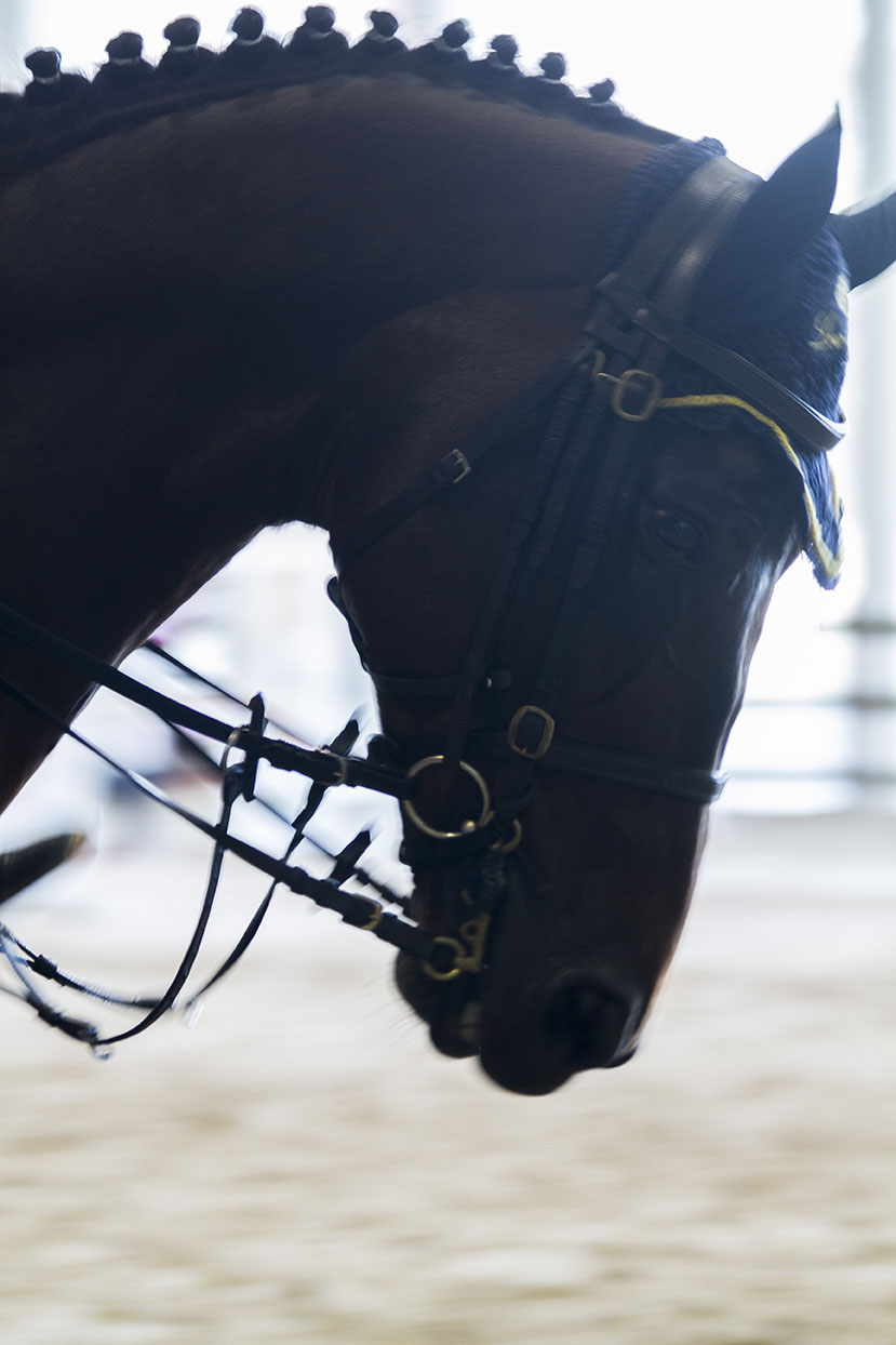 A HORSE IN TRAINING